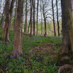 Beautiful Woodlands
