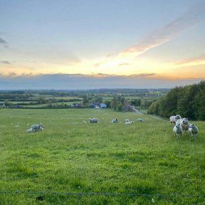 Highway Hill Sheep Field